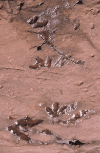 Major Bells Tower And Dinasour Footprints