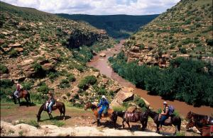 Pony Trekking Tour Packages